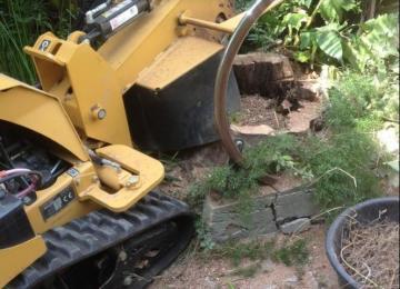 Rognage de souche après abattage d'arbre - Antibes (06)