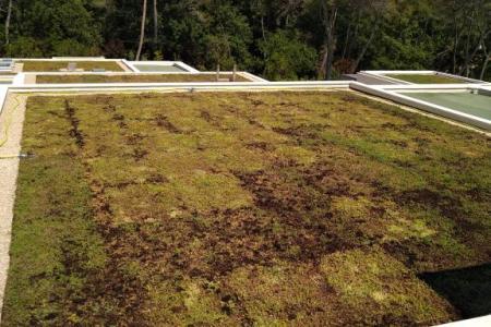 Réalisation d'une toiture végétalisée à Mougins (06)