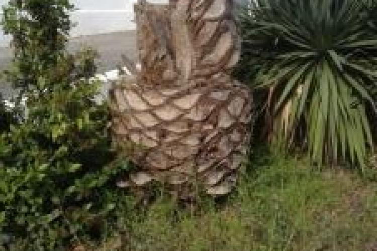En quoi consiste la destruction d'une souche d'arbre dans un massif ?