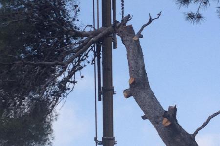 Abattage d'arbre en grutage à Antibes