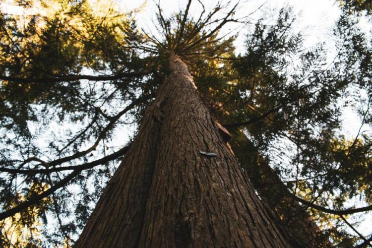 Combien coûte un élagage d'arbres ?