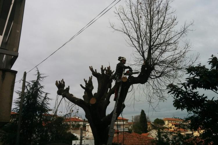 Pèriode d'élagage des arbres