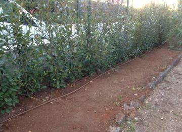 Haie de photinias terminée - Jardin Cap d'Antibes - Clean Jardin