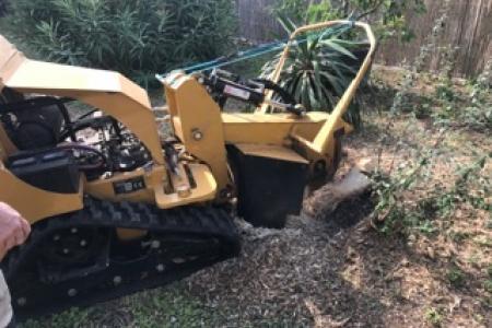 Destruction de souche d'arbre à Biot (06)