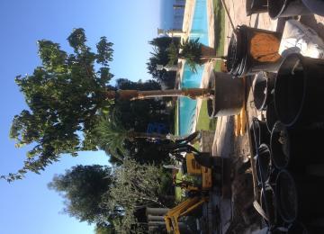 Plantation d'un arbre sur une terrasse