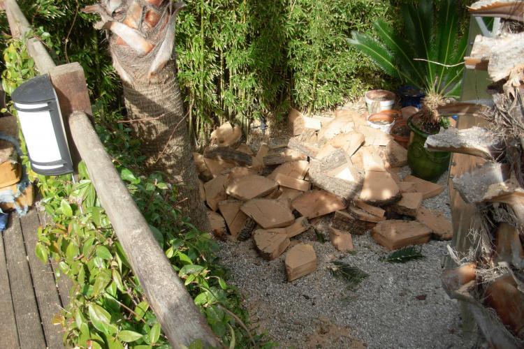 Quel prix pour l'abattage d'un palmier ?