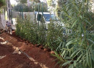 Haie de clôture végétale - Clean Jardin Antibes 06
