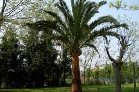 Entretien des palmiers d'extérieur à Valbone (06)