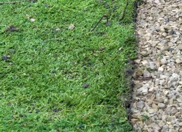Installation de sédum pour toiture végétalisée dans les Alpes-Maritimes (06)