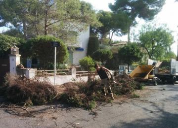 Abattage d'une haie de cyprès ancienne et évacuation - Clean jardin à Antibes