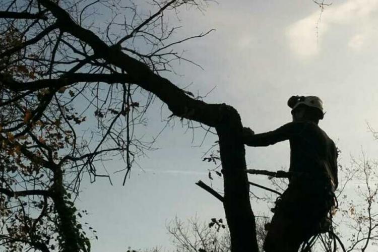Elagage et abattage d'arbre<br> toutes hauteurs