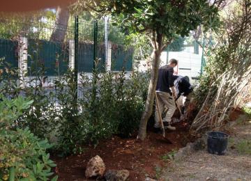 Plantation haie de photonias et installation d'arrosage goutte à goutte - clôture Cap d'Antibes - Clean Jardin