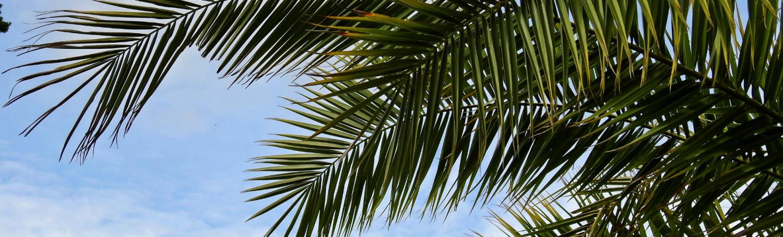 Taille de palmier près d'Antibes (06)