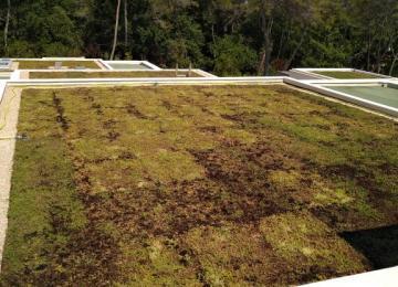 Végétalisation des toits terminée