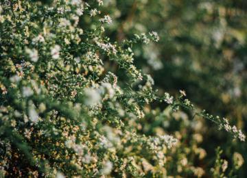 Débroussaillage obligatoire Alpes Maritimes - Jardinier pro Clean Jardin