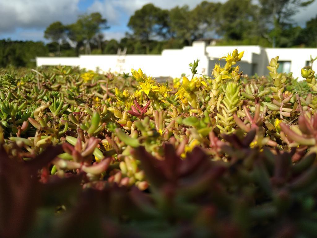 Toiture végétalisée - Toit végétal - Création Clean Jardin - Antibes - Nice - Cannes