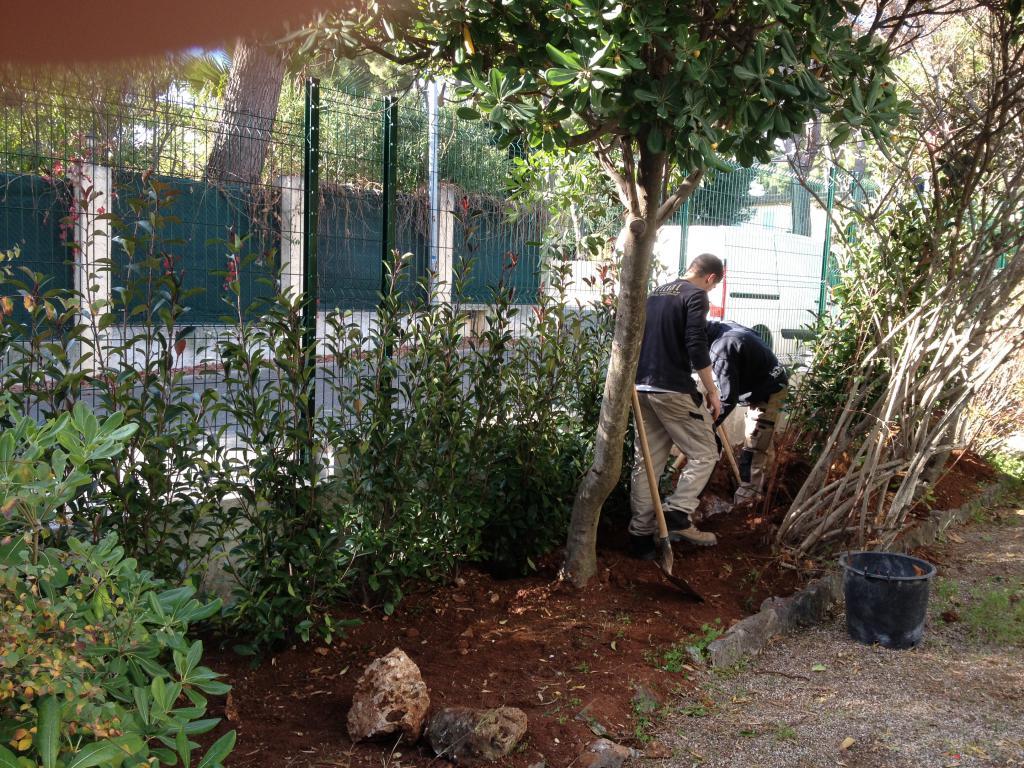 Photonia Haie vegetale - Cap d'Antibes - Clean Jardin
