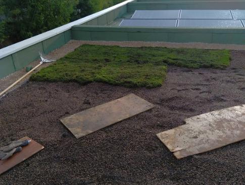 Clean Jardin installation toiture vegetalisee mandelieu 06- Alpes Maritimes