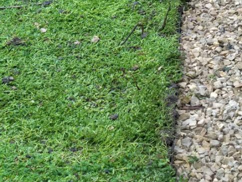 Sedum mise en place toit végétalisé - clean jardin Mandelieu