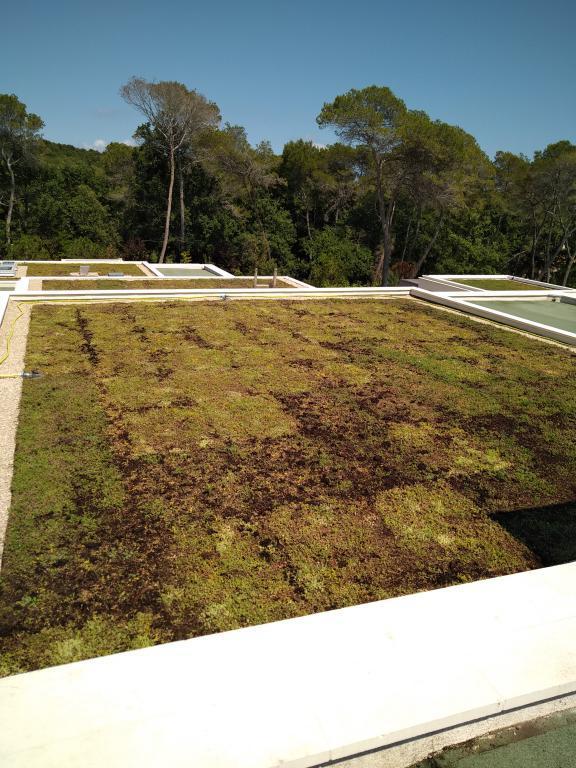 Végétalisation de toiture - Mougins - Cannes - Antibes - 06