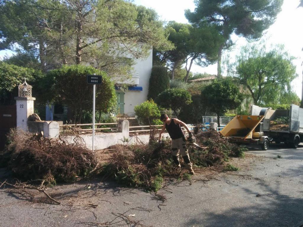 Abattage de haie de cyprès - Cap d'Antibes - 06 - Clean Jardin